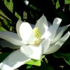 magnolia self-healing exercises